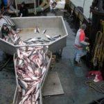 Fish Composting Helps Naknek